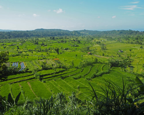 east bali rice fields amazing view